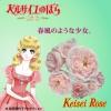 【緊急入荷】この春に、ガーデンのシンボルに!! ベルサイユのばら!!!! ロザリー ラ モリエール(Rosalie Lamorliere ) 新苗  1個(ビニールポット)