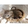 羊毛 かご入り子猫 オシキャット