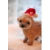 羊毛フェルト クリスマステリアシリーズ・ノーフォーク子犬