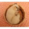 羊毛フェルト 籠でお昼寝するシャム系猫ちゃん