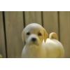 【送料無料】粘土フィギア 子犬シリーズNo.3 「ラブラドールレトリバー 子犬」 ハンドメイド