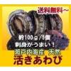 瀬戸内産 天然アワビ980円〜 【送料無料】