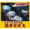 瀬戸内産 天然サザエ980円〜 【送料無料】