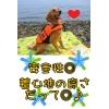 【大型犬ライフジャケット】アウトドア水遊びに最適!水遊び・介護・歩行補助用にも【ゆったりLサイズ】