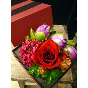 BOX maroon