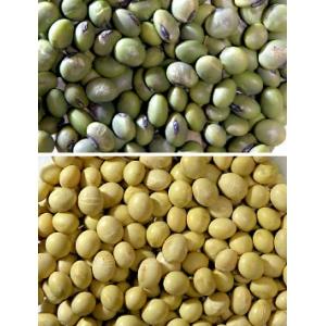 農場自慢の青大豆/1キロ