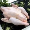 宇和海で育ったヘルシーな高級肉質『媛っこ地鶏丸抜きタイプ(重量約3kg)』