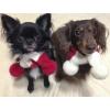 犬用手編みマフラー(ホワイトボンボン)-SSサイズ